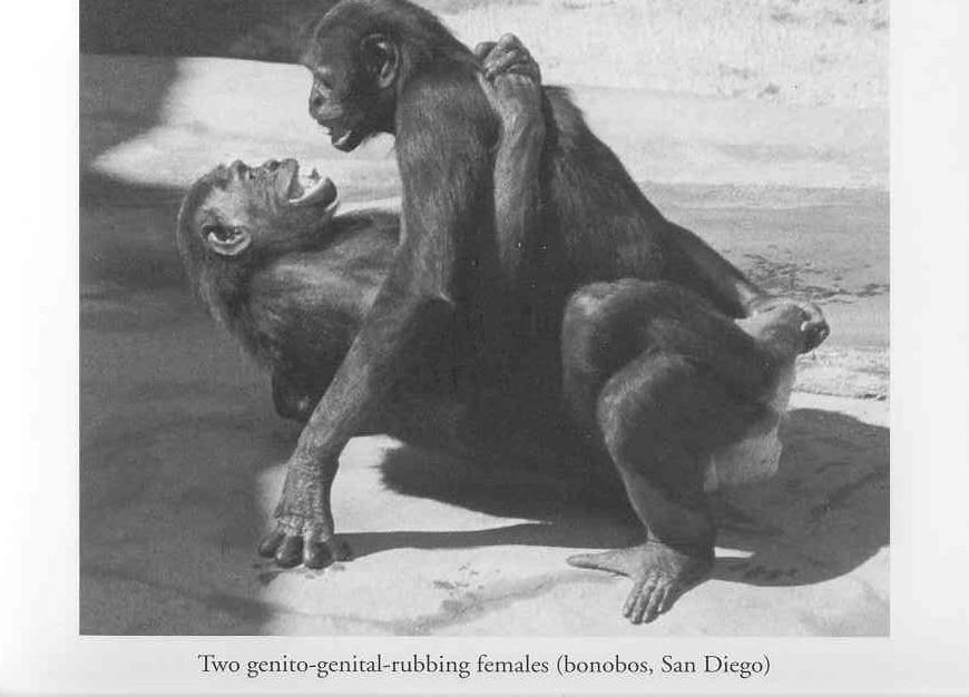 Opinion Monkey women penetration sex